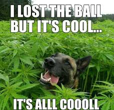 Lost Dog Meme - i lost my ball but it s cool weknowmemes