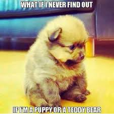 Cute Memes - top 79 funny and cute puppies memes adsbygoogle window