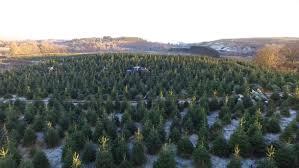 christmas tree farming in scotland u2013 a photo essay art and