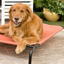 Replacement Hammock Bed Coolaroo Elevated Pet Bed With Replacement Cover Hayneedle