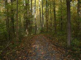 Delaware Forest images Blackbird state forest home facebook