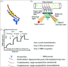 towards dna methylation detection using biosensors analyst rsc