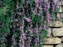 187 best flower garden plants images on pinterest flower