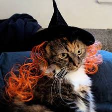 Pet Cat Halloween Costume 10 Halloween Costumes Pets 2012 Mnn Mother Nature