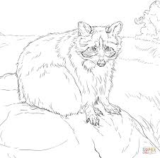 j coloring pages sitting raccoon coloring page free printable coloring pages