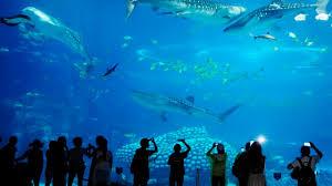 deep sea world aquarium youtube