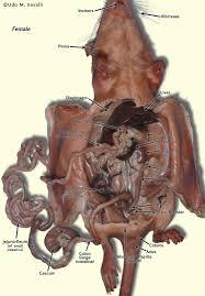 Male Spider Anatomy Female Internal Anatomy Human Anatomy Chart