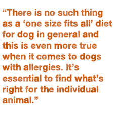pet food allergies and the elimination diet