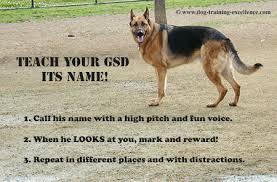 belgian shepherd for sale in india best german shepherd names to catch your dog u0027s attention