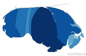 Cartogram Map Reshaping The Country Cconley Ca