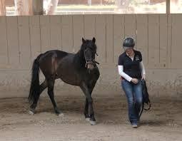 California Flag Horse Hitm For 03 24 2015 U2013 Horsemanship Radio U2013 Monty Roberts