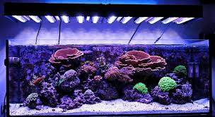 led aquarium lights for reef tanks cocoon nr 7 45x30x32cm nano aquarium pinterest nano aquarium