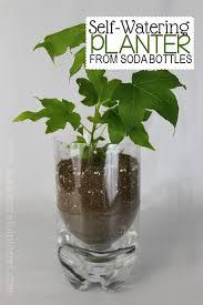 best 25 self watering bottle ideas on pinterest self watering