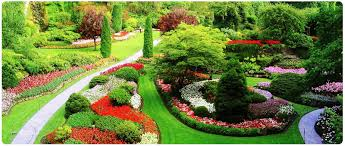 Best Plants For Rock Gardens by Amazing Green Garden Design With Colorful Plants And Small Ways To