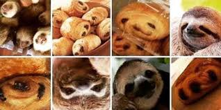 Sloth Fitness Meme - blueberry muffin chihuahua meme animal or food memes