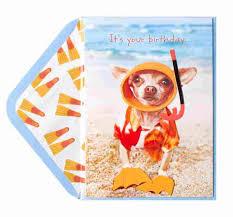 birthday snorkel chihuahua birthday cards papyrus