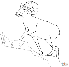 bighorn sheep coloring free printable coloring pages