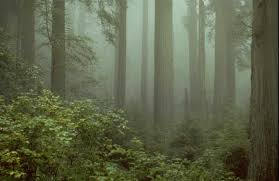 large trees disappearing worldwide ars technica