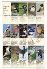 a billion bird flock the magic mystery and biology of bird