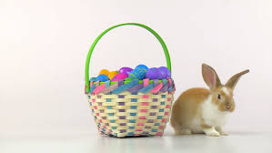 easter basket bunny easter bunny in an easter basket stock footage 2191567
