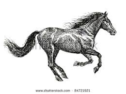 horse sketch stock images royalty free images u0026 vectors