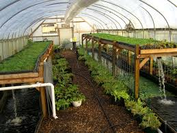 aquaponics system workshops by will allen of growing power