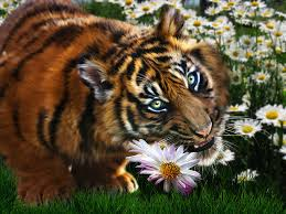 tiger flowers digital by julie l hoddinott