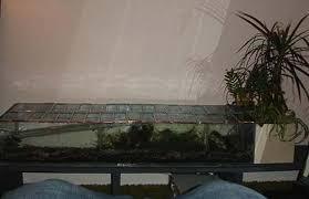 an aquarium inside a terrrarium