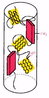 general structure of spider silk