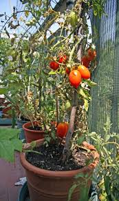 Benefits Of Urban Gardening - four benefits of urban gardening
