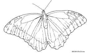 coloring page butterfly monarch monarch butterfly coloring page fansign me