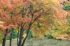 fall colors algonquin park canada
