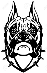 boxer dog black and white boxer dog head black and white front view illustration royalty