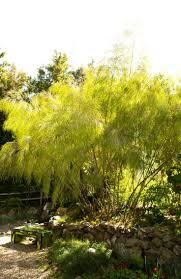 native plant sale muskoka conservancy 12 best wind break plants images on pinterest landscaping
