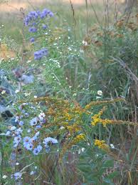 delaware native plants native grass and wildflower seeding q u0026 a with the experts