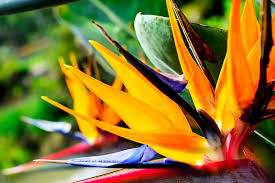 Tropical Plants Pictures - tropical plants for sizzling summer containers