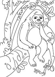 lazy animal sloth coloring lazy animal sloth coloring