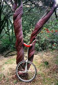 manzanita trees winter in gold country photo closeup