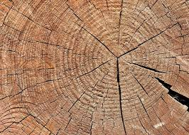 wood tree rings images Rough textured wooden cut with tree rings and cracks stock photo jpg