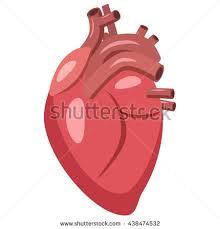 Cartoon Human Anatomy Human Heart Anatomy Organs Symbol Vector Stock Vector 582228028
