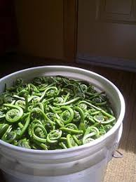 cours de cuisine orl饌ns fiddlehead fern wikivisually