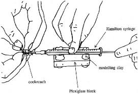 determining hemolymph volume cockroach