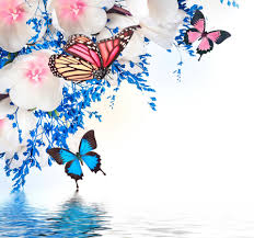 spring blossom tulips purple flowers butterflies reflection water