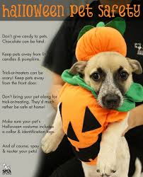 Halloween Costume Ideas For Pets 20 Best Pet Costume Ideas Images On Pinterest Animals Pet