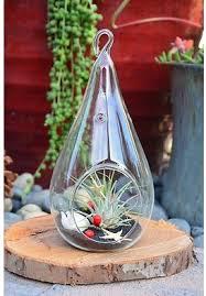 40 best terrarium images on pinterest terrarium ideas bell jars