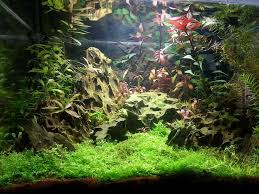 Aquascape Fish Dragons U0027 Sunset