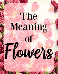 100 meaning of different color flowers which flowers mean