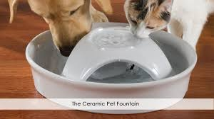 the ceramic pet fountain by hammacher schlemmer youtube