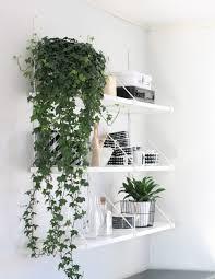 indoor plants english ivy good indoor plants gallery xtend