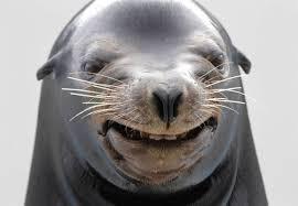 Seal Meme Generator - happy seal meme generator imgflip